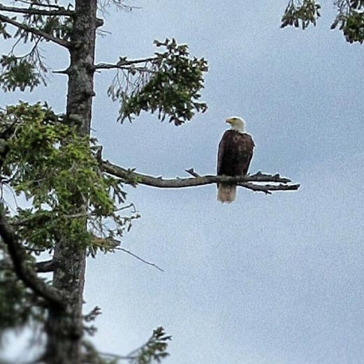 Perched Near the Nest..